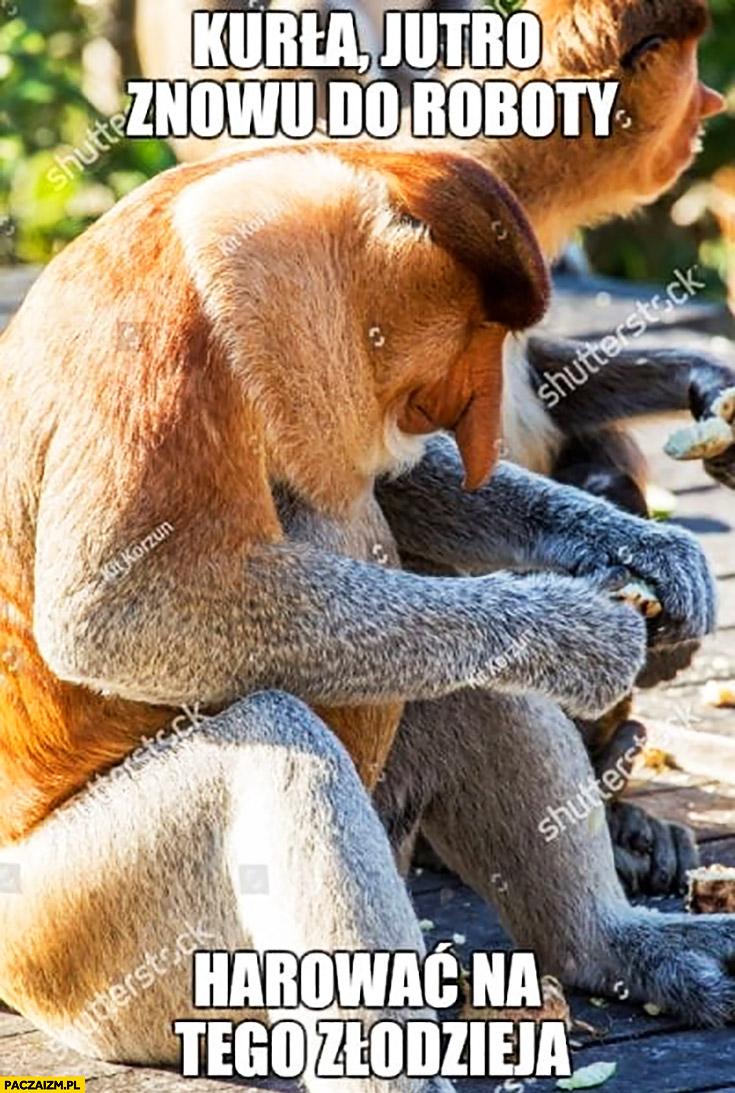 Kurna jutro znowu do roboty harować na tego złodzieja typowy Polak nosacz małpa