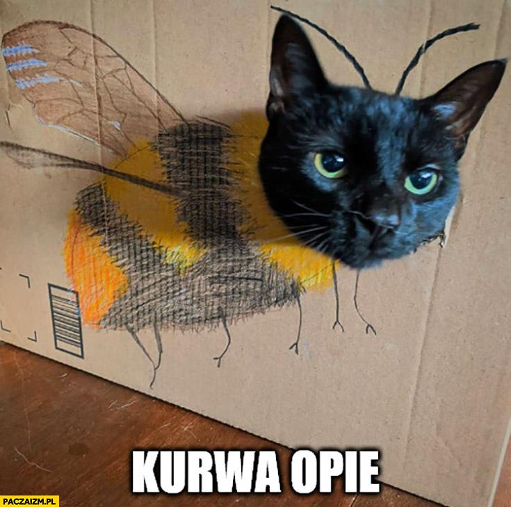 Kurna opie kot pszczoła pszczółka