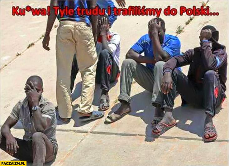 Kurna tyle trudu i trafiliśmy do Polski imigranci z Afryki facepalm