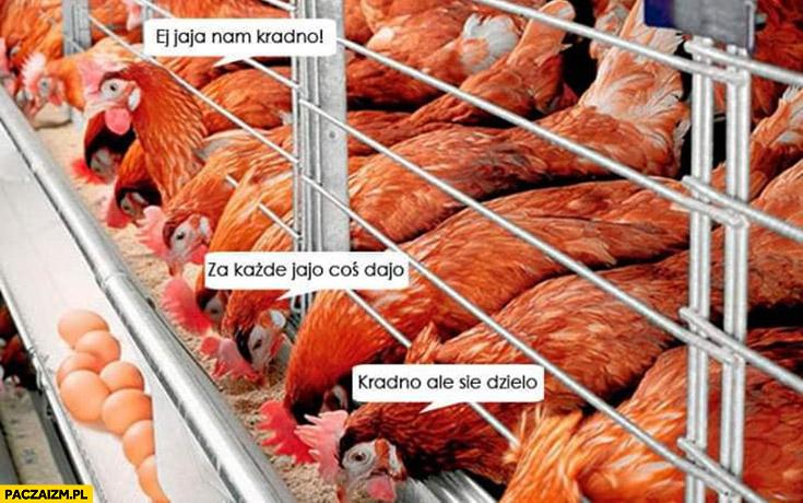 Kury: jaja nam kradną, za każde jajo coś dają, kradną ale się dzielą