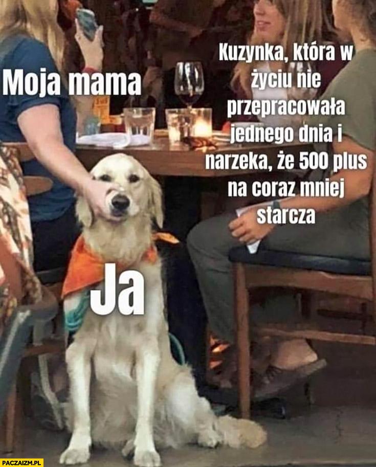 Kuzynka która w życiu nie przepracowała jednego dnia narzeka, że 500 plus na coraz mniej starcza ja moja mama trzyma psa za pysk
