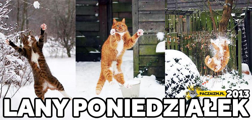 Lany Poniedziałek kot dostaje śnieżką