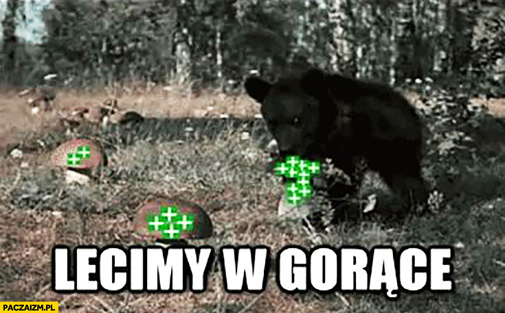 Lecimy w gorące plusy niedźwiedź niedźwiadek wykop
