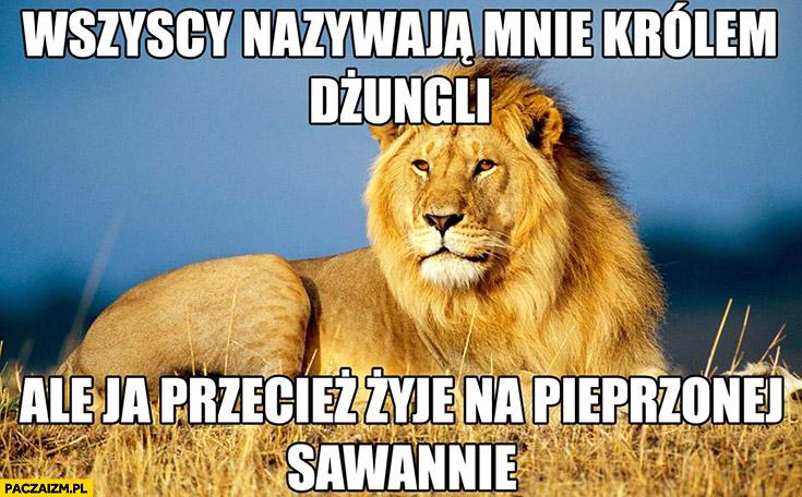 Lew wszyscy nazywają mnie królem dżungli ale ja przecież żyję na pieprzonej sawannie