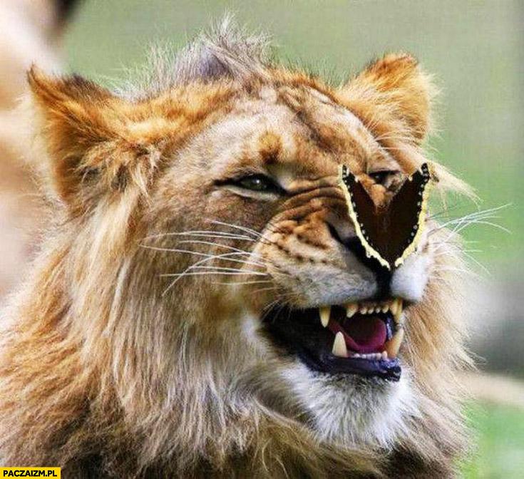 Lew z motylem na nosie