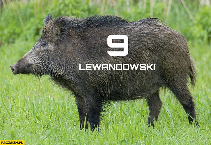 Lewandowski dzik z numerem 9