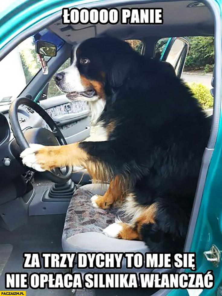 Ło panie za trzy dychy to mi się nie opłaca silnika włączać pies taksówkarz złotówa