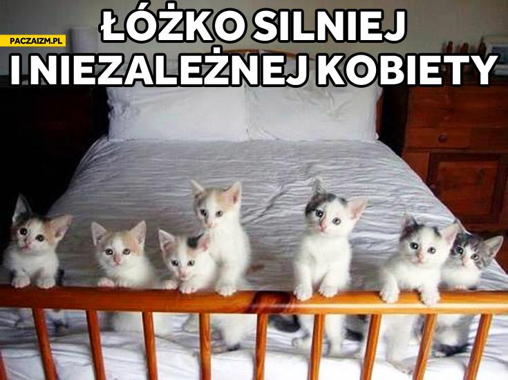 Łóżko silnej i niezależnej kobiety kociaki kotki