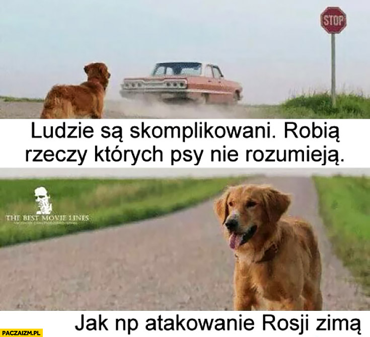 Ludzie są skomplikowani, robią rzeczy których psy nie rozumieją, jak np. atakowanie Rosji zimą