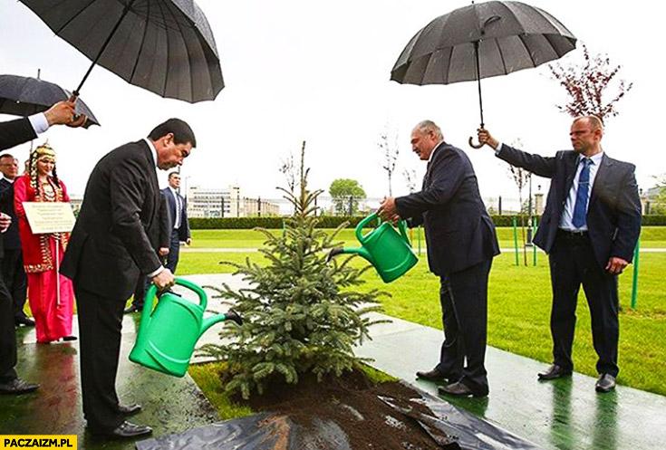 Łukaszenka podlewa choinkę konewką w czasie deszczu fail