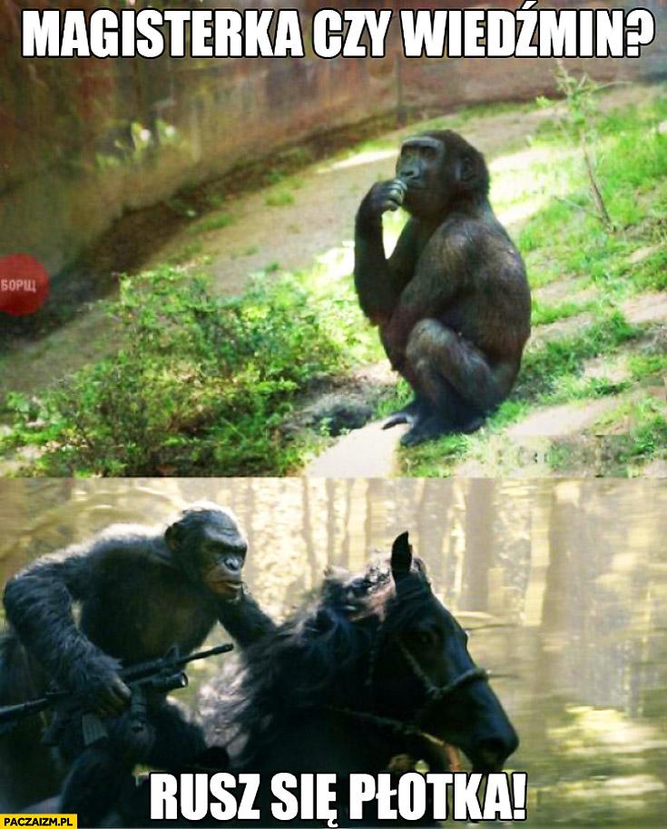 Magisterka czy Wiedźmin rusz się plotka małpa