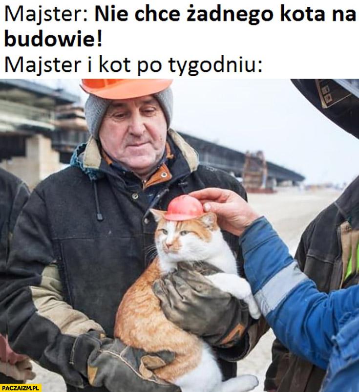 Majster nie chcę żadnego kota na budowie majster i kot po tygodniu