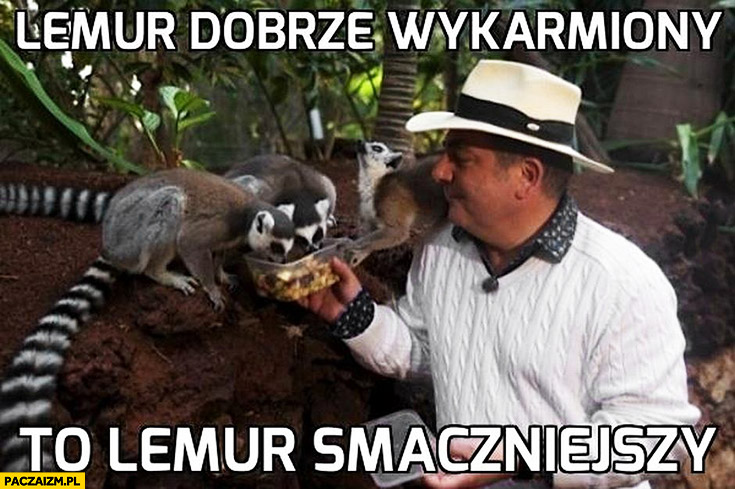 Makłowicz lemur dobrze wykarmiony to lemur smaczniejszy