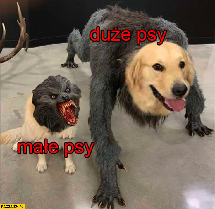 Małe psy vs duże psy porównanie przeróbka