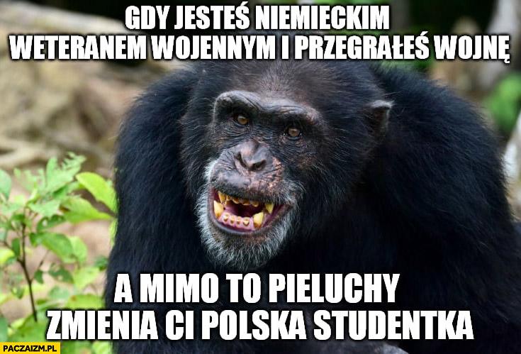 Małpa gdy jesteś niemieckim weteranem wojennym i przegrałeś wojnę a mimo to pieluchy zmienia Ci Polska studentka