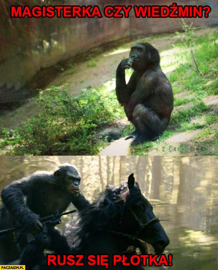 Małpa magisterka czy Wiedźmin? Rusz się Płotka