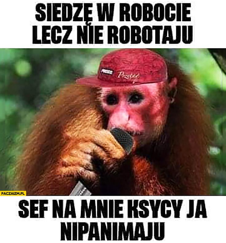 Małpa Ukrainiec raper rapuje siedzę w robocie lecz nie robotaju, szef nie krzyczy ja nie panimaju