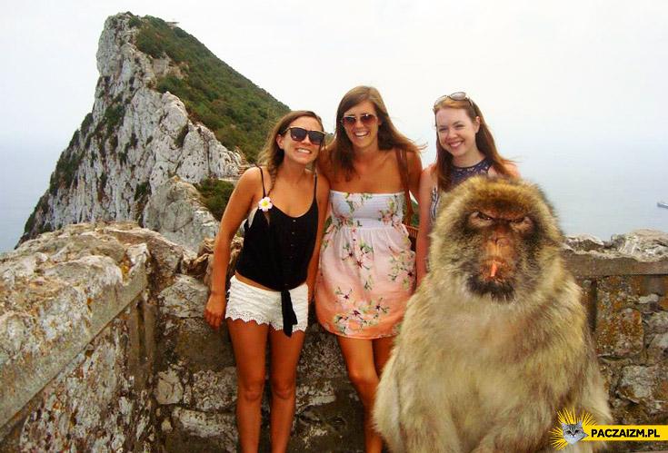 Małpka trolluje zdjęcie