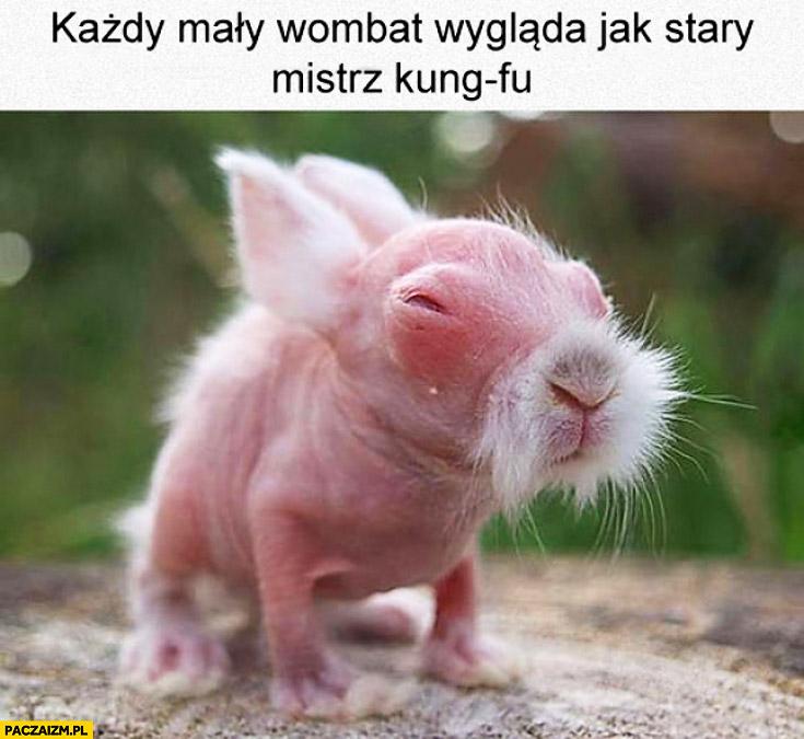 Mały wombat wygląda jak stary mistrz kung-fu