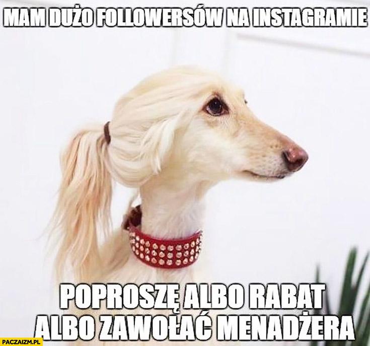 Mam dużo followersów na instagramie poproszę albo rabat albo zawołać menadżera pies hipster