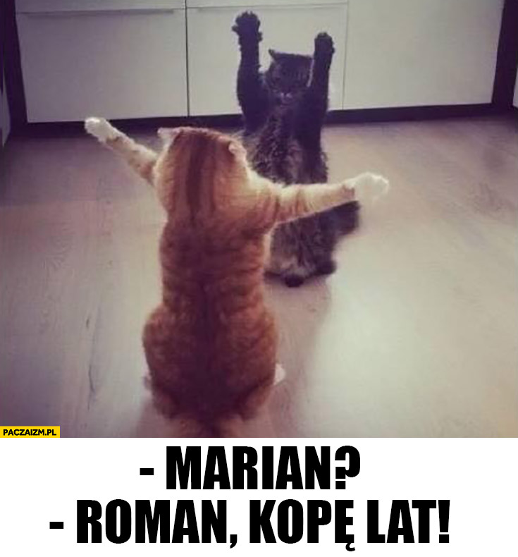 Marian?! Roman! Kopę lat koty się witają