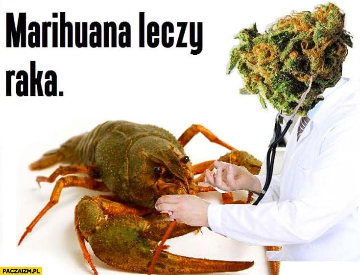 Marihuana leczy raka dosłownie przeróbka