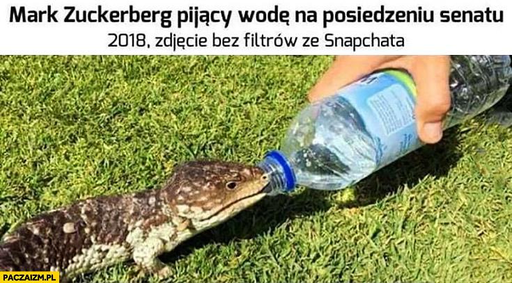 Mark Zuckerberg pijący wodę na posiedzeniu senatu 2018 zdjęcie bez filtrów Snapchata jaszczurka reptilianin