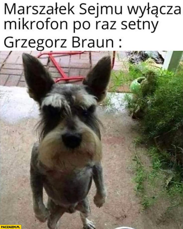 Marszałek sejmu wyłącza mikrofon po raz setny, Grzegorz Braun oburzony pies piesek