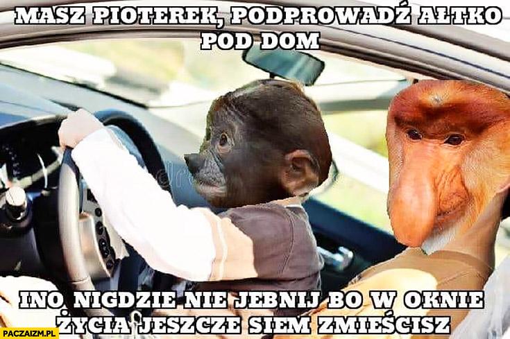 Masz Pioter poprowadź auto pod dom, tylko nigdzie nie jebnij bo w oknie życia się jeszcze zmieścisz typowy Polak nosacz małpa