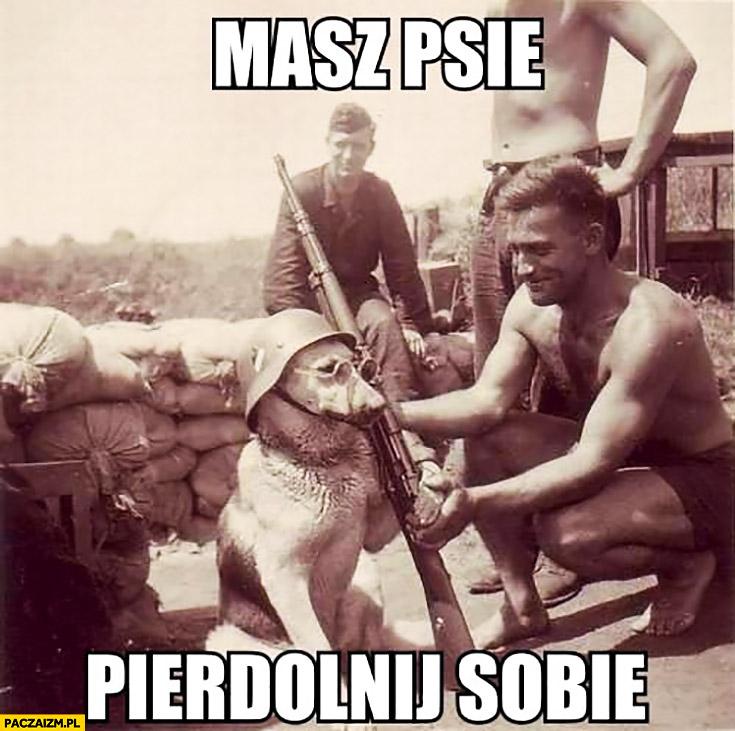 Masz psie pierdzielnij sobie pies z karabinem na wojnie