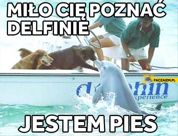 Miło cię poznać delfinie, jestem pies