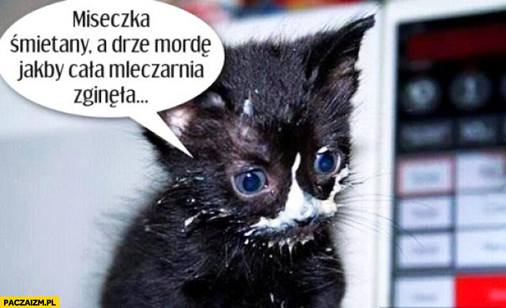 Miseczka śmietany a drze mordę jakby cała mleczarnia zginęła kot