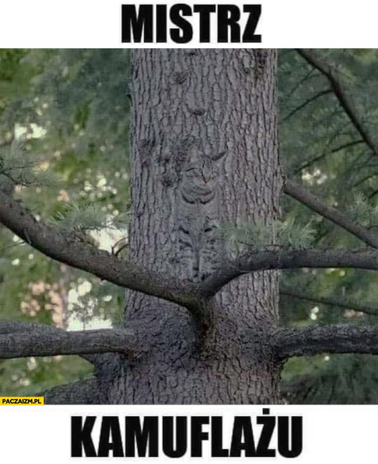 Mistrz kamuflażu kot na tle drzewa