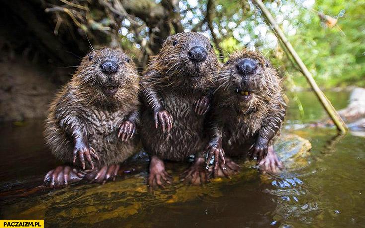 Mokre bobry
