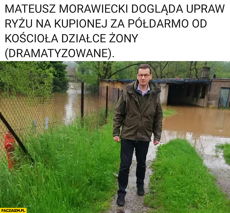 Morawiecki dogląda upraw ryżu na kupionej za półdarmo od kościoła działce żony (dramatyzowane)