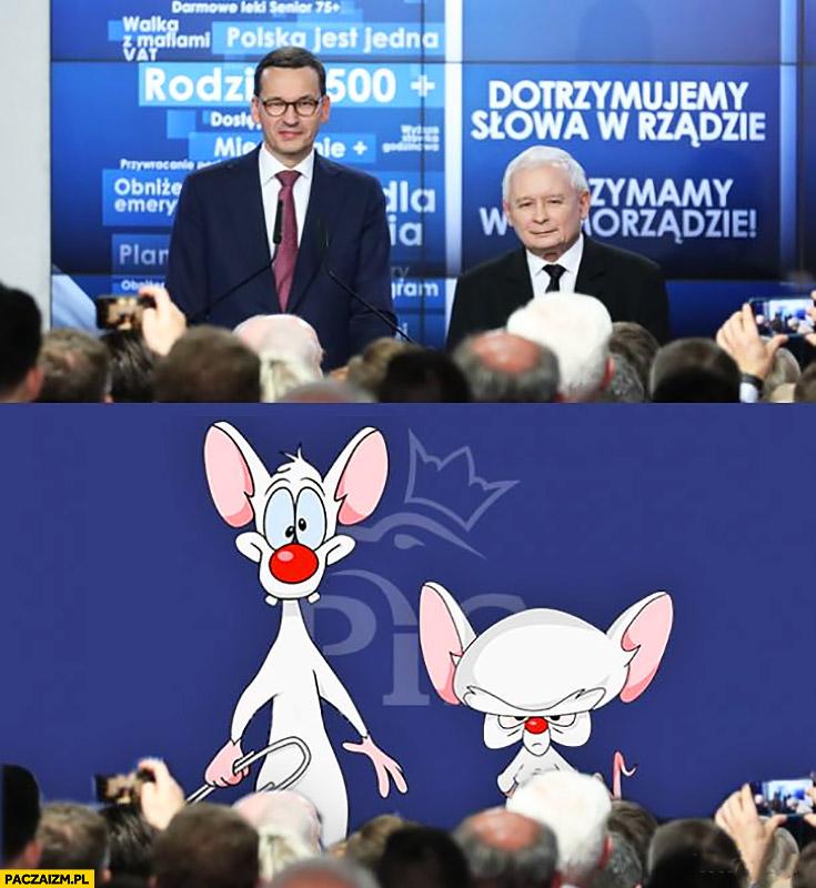 Morawiecki Kaczyński jak Pinky i mózg PiS Prawo i Sprawiedliwość