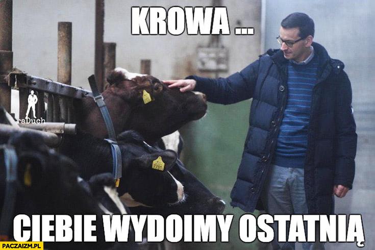 Morawiecki krowa Ciebie wydoimy ostatnią