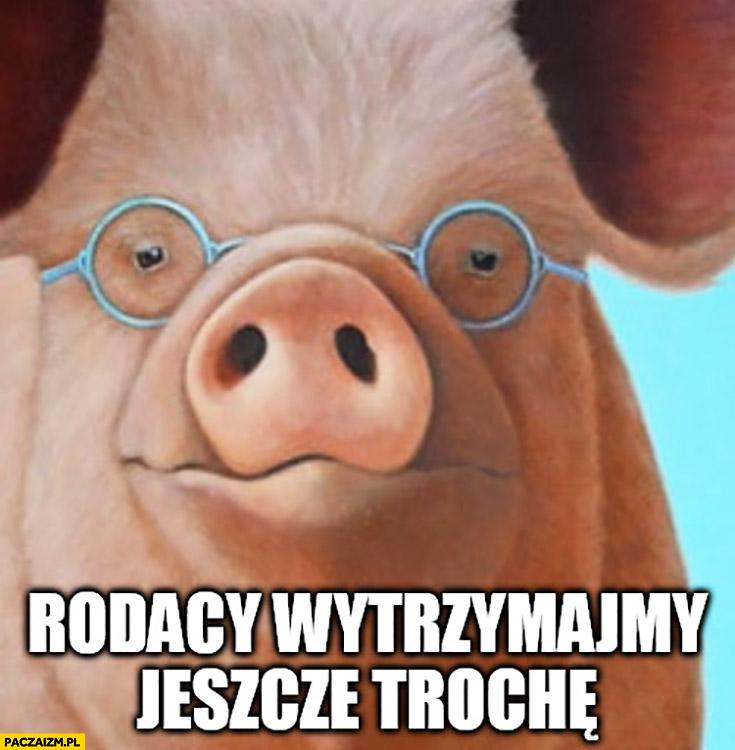 Morawiecki rodacy wytrzymajmy jeszcze trochę knur świnia