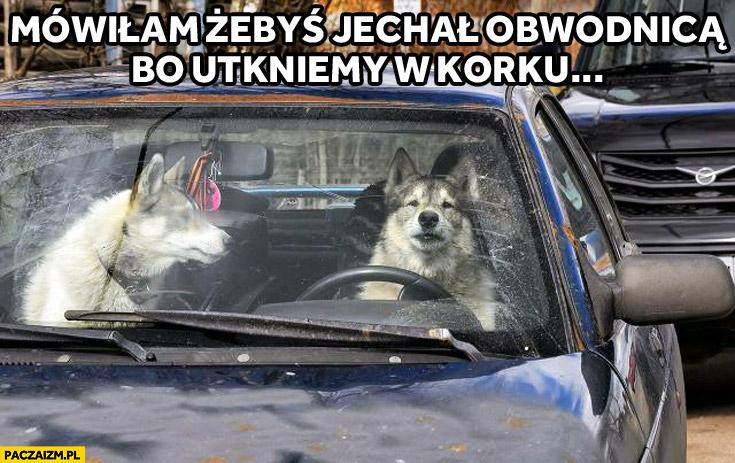 Mówiłam żebyś jechał obwodnicą bo utkniemy w korku psy