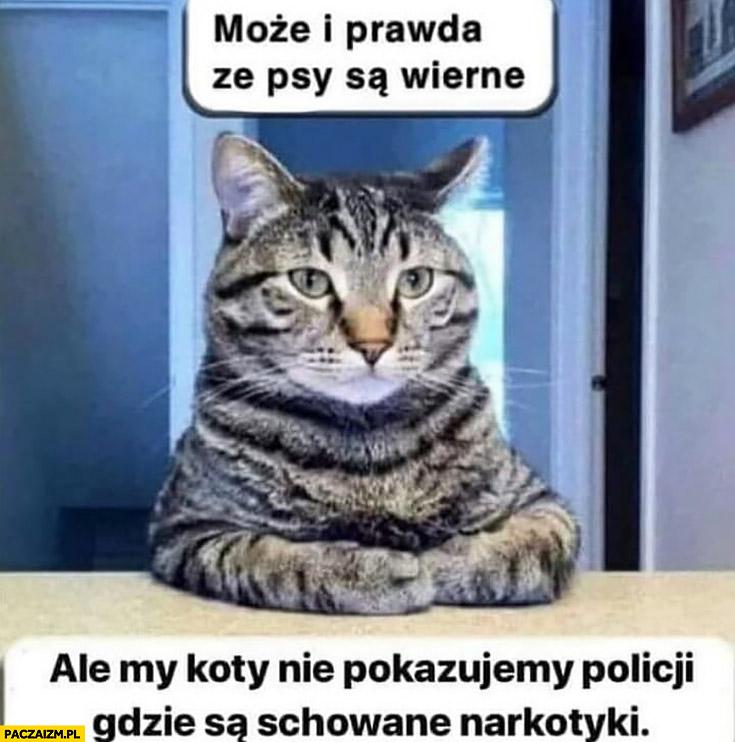 Może i prawda, że psy są wierne ale my koty nie pokazujemy policji gdzie są schowane narkotyki