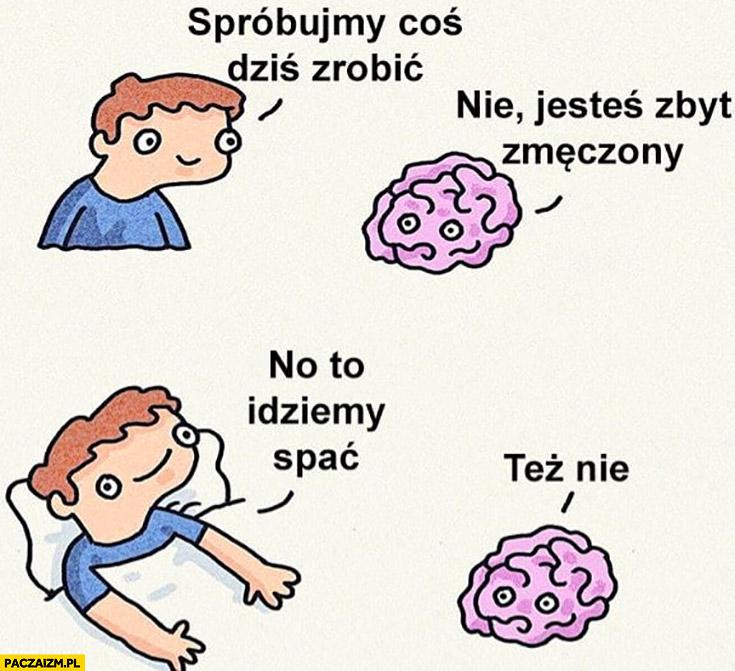 Mózgu spróbujmy coś dziś zrobić, nie, jestem zbyt zmęczony no to idziemy spać, też nie