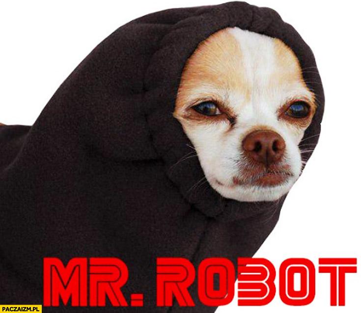 Mr Robot pies w kapturze