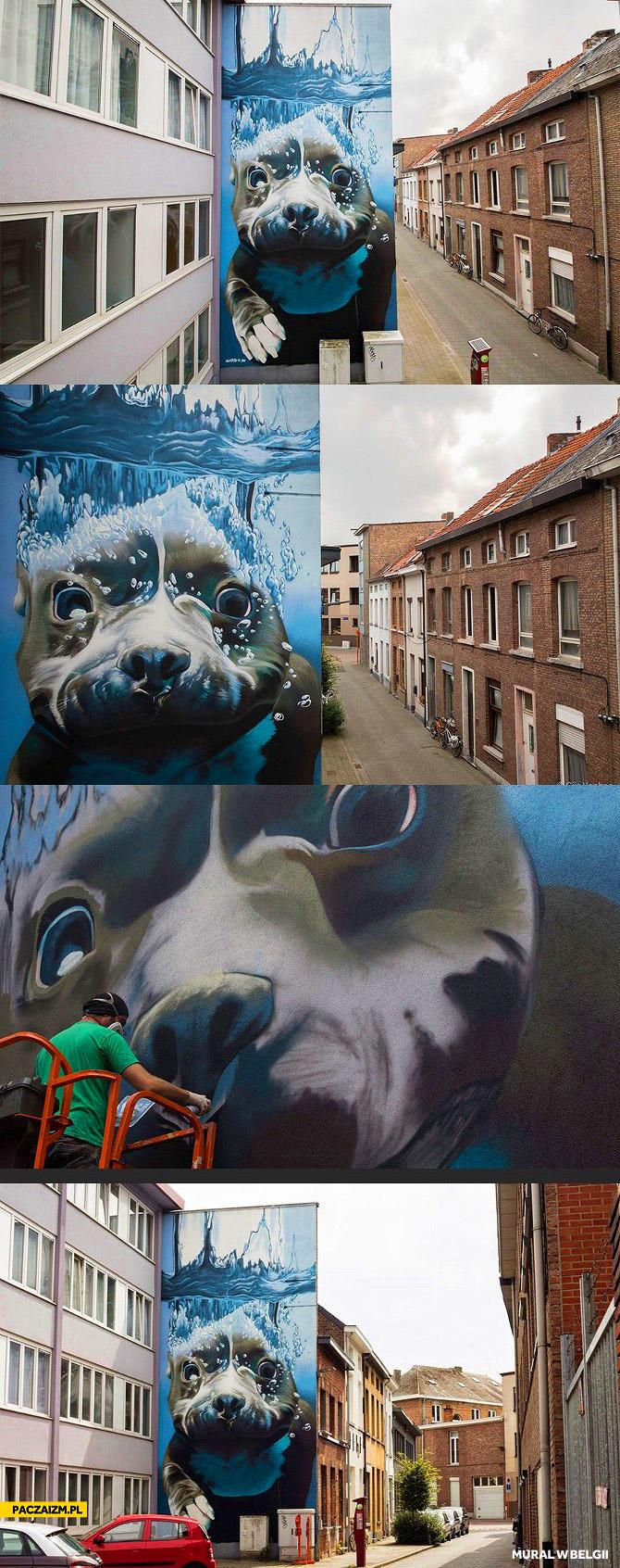 Mural w Belgii pies pod wodą