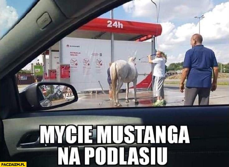 Mycie mustanga na Podlasiu koń na myjni samochodowej