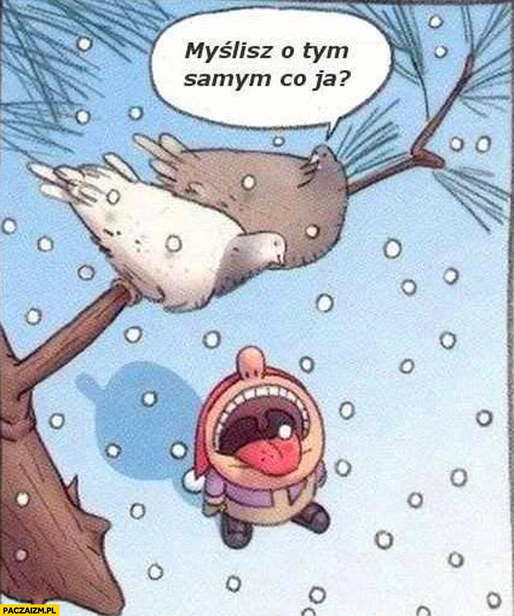Myślisz o tym samym co ja? Dziecko śnieg gołębie