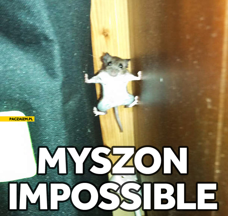 Myszon impossible