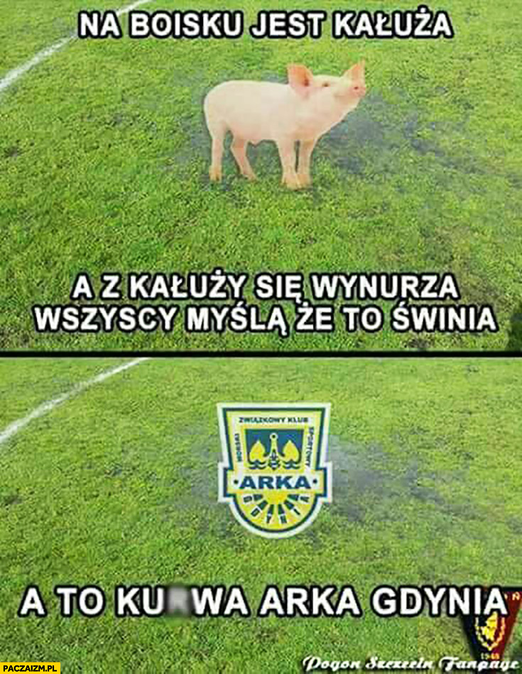Na boisku jest kałuża, a z kałuży się wynurza wszyscy myślą, że to świnia a to kurna Arka Gdynia