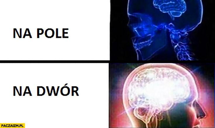 Na pole na dwór mózg porównanie
