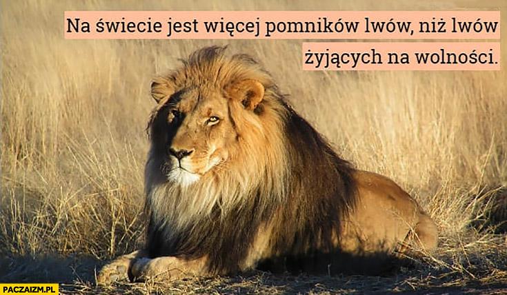 Na świecie jest więcej pomników lwów niż lwów żyjących na wolności lew ciekawostka
