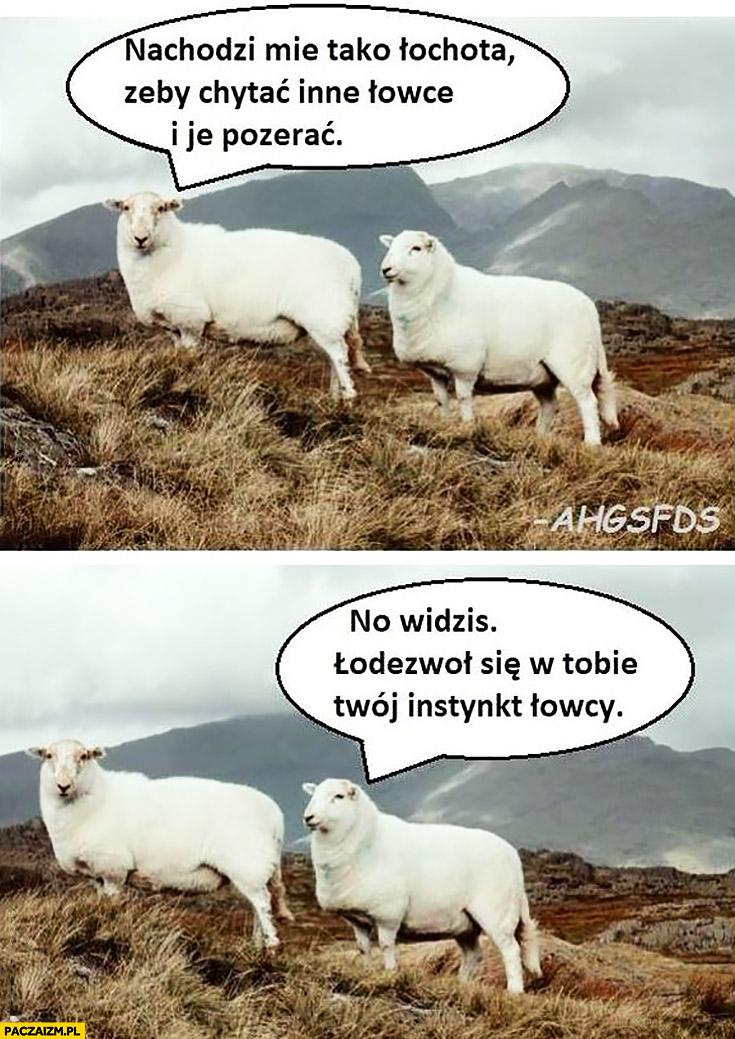 Nachodzi mnie taka ochota żeby chwytać inne owce i je pożerać, no widzisz odezwał się w Tobie Twój instynkt łowcy